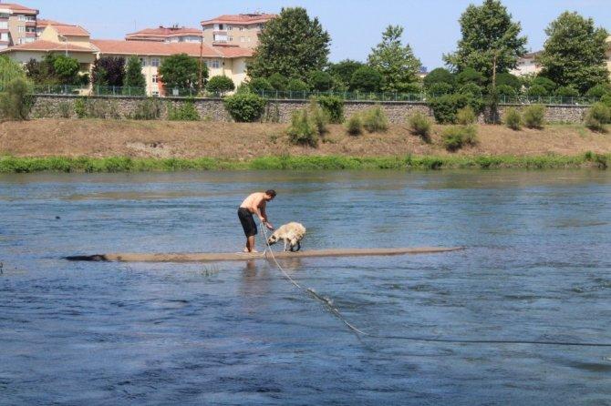 Köpek kurtarma operasyonu