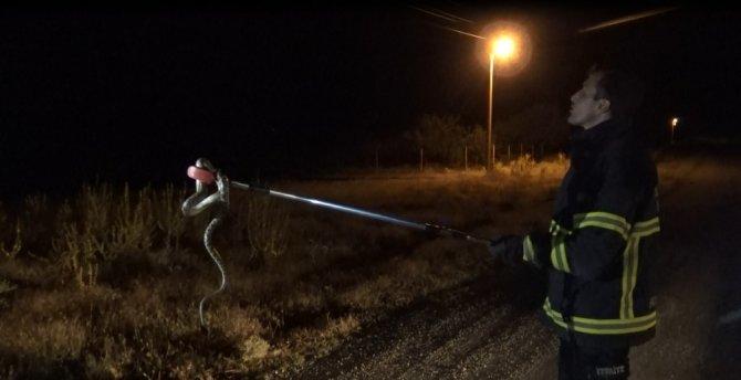 Sürücünün yolda fark edip ezmek istemediği yılan aracın içine girdi
