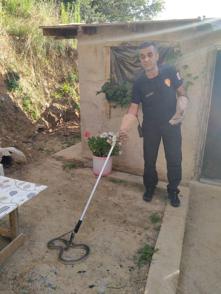 Tandır içersinde yakalanan 1.5 metrelik yılan doğaya salındı