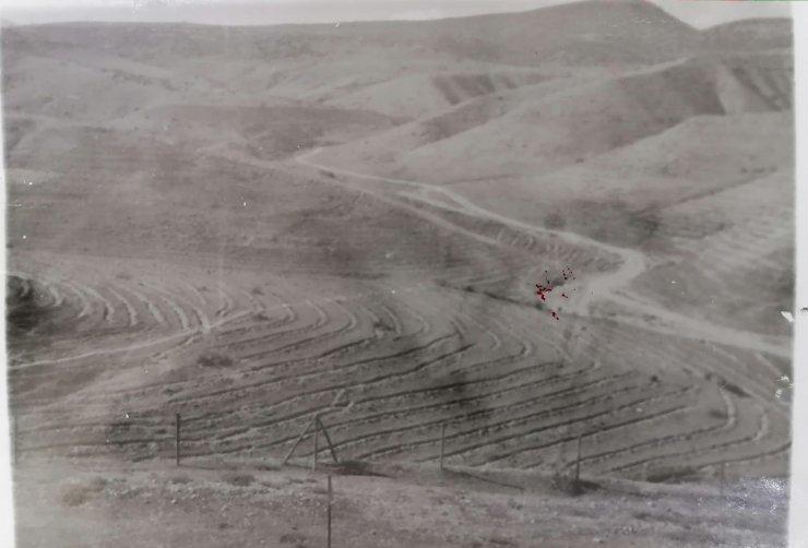 Çorak arazi 40 yılda ormana dönüştürüldü