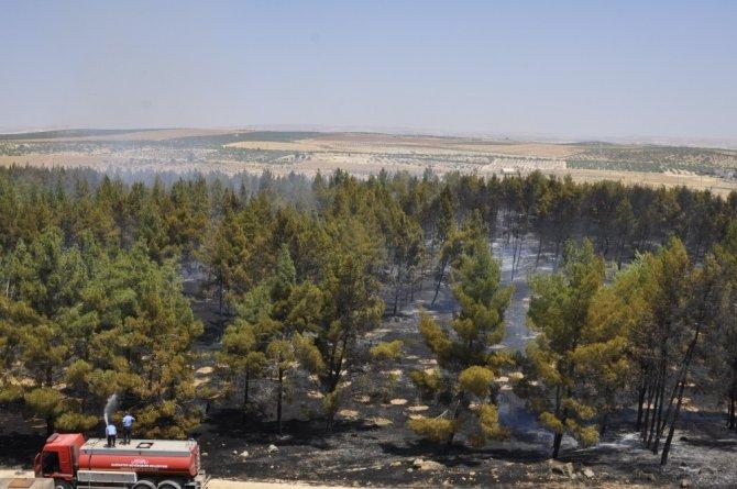 Nizip'teki orman yangını söndürüldü