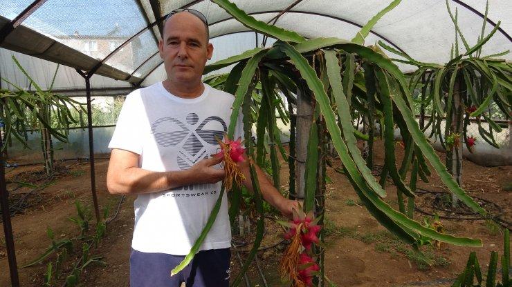 Tayland'da görüp memleketinde yetiştirdiği meyvenin tanesini 15 liradan satıyor
