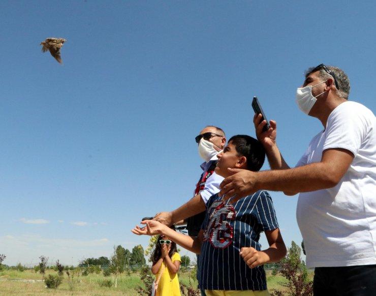 Türkiye'de ilk kez tek seferde 20 yabani hayvan doğaya salındı