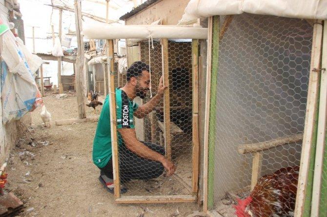 22 civcivle kümes açan genç, sosyal medya fenomeni olunca çiftlik kurdu