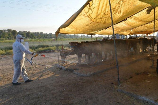 Çiğli'de hayvan pazarları dezenfekte edildi