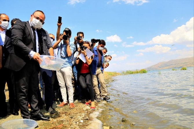 İlk defa üretimi yapılan 420 bin adet siraz balığı, Hazar Gölü'ne bırakıldı