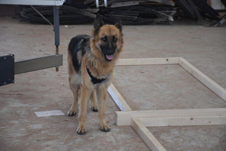 Köpeğin bulduğu kafatasının ardından bölgede bir de kemik parçasına rastlandı