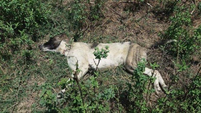 Tarsus'ta 4 köpeği zehirlediler