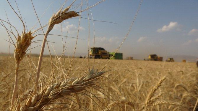 Türkiye'nin sertifikalı tohumları Muş'tan
