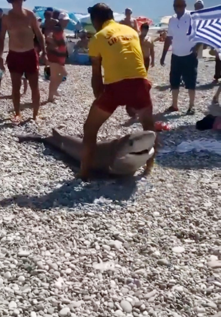 Antalya'da köpekbalığı ölüsü kıyıya vurdu