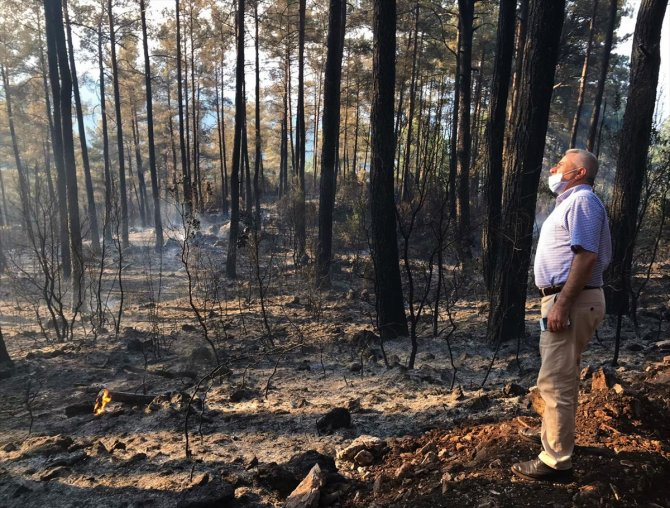 Orman yangınının mangaldan çıktığı tespit edildi