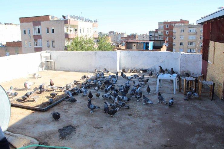 Diyarbakır'da güvercin oteli açıldı; içinde 1 milyon TL'lik kuş var