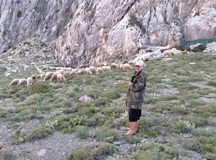 Hayvan otlatırken uçuruma düşen çoban kurtarıldı
