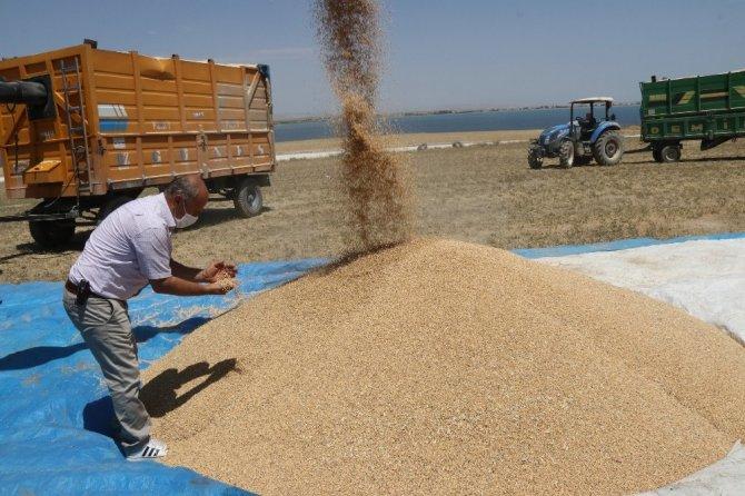 Bitlis'te 100 milyon TL'lik buğday hasılatı bekleniyor