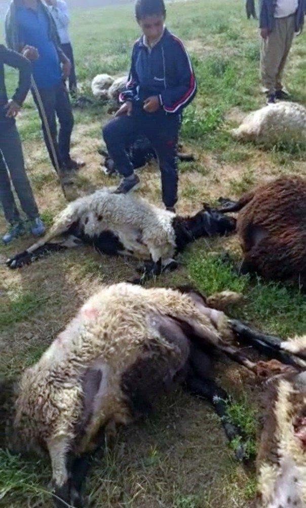 Meraya yıldırım düştü, 17 koyun telef oldu