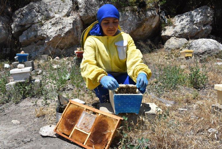 Ürettiği kraliçe arıların tanesini 100 liradan satıyor