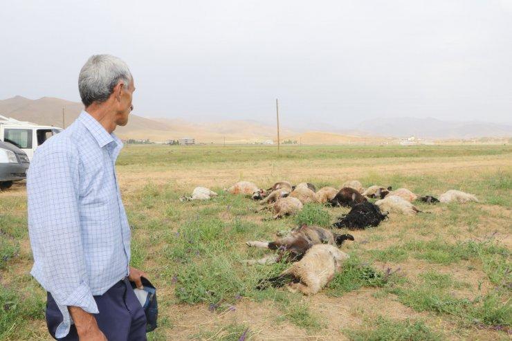 Yüksekova'da yıldırımlar can aldı: 1 kişi öldü, 19 koyun telef oldu