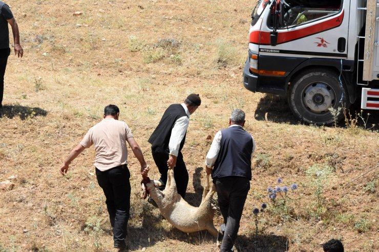 Konya'da kurbanlık yüklü kamyon şarampole devrildi: 3 yaralı