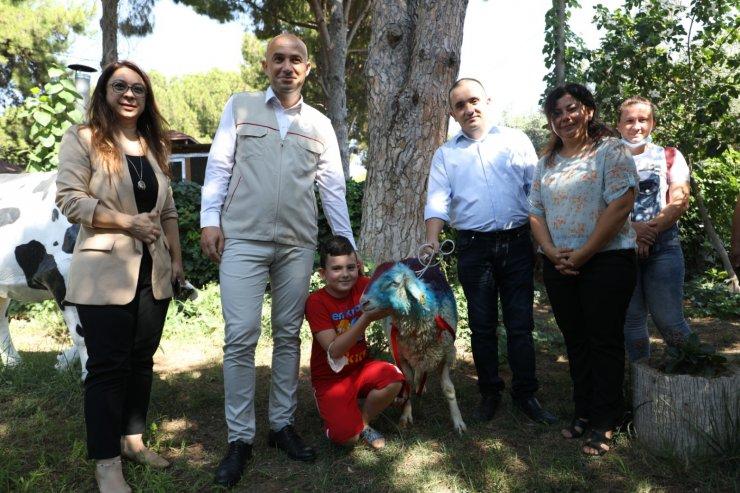 CİMER'den kurbanlık isteyen vatandaşa, Bakan Pakdemirli'den hediye koç