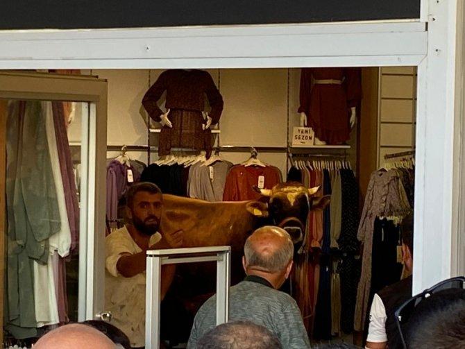 Kaçan boğa girdiği giyim mağazasını bir birine kattı