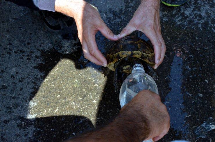 Kaplumbağayı alevlerin arasından kurtarıp, suyla serinlettiler