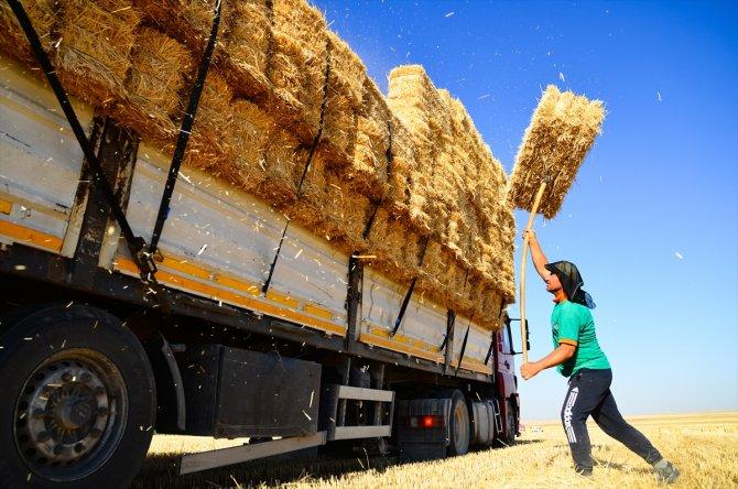 Konya Ovası'nda balya işçilerinin zorlu ekmek mücadelesi