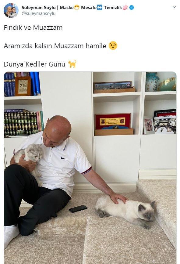 Bakan Soylu'dan 'Dünya Kediler Günü' paylaşımı