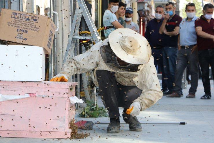 Tabelaya yuva yapan arılar yüzünden esnaf  iş yerlerini açamadı