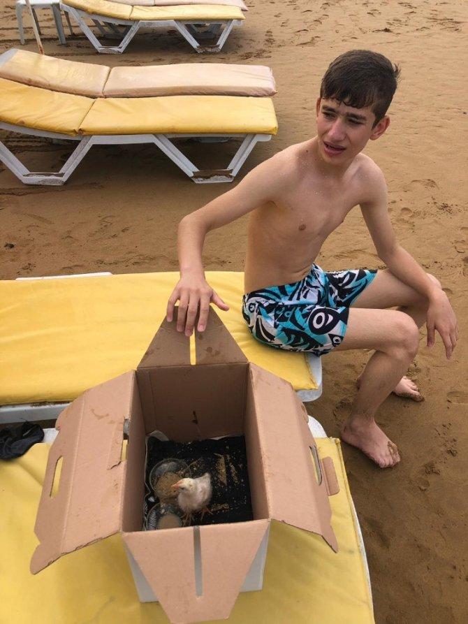 Tatillerini çok sevdikleri civcivle birlikte yapıyorlar
