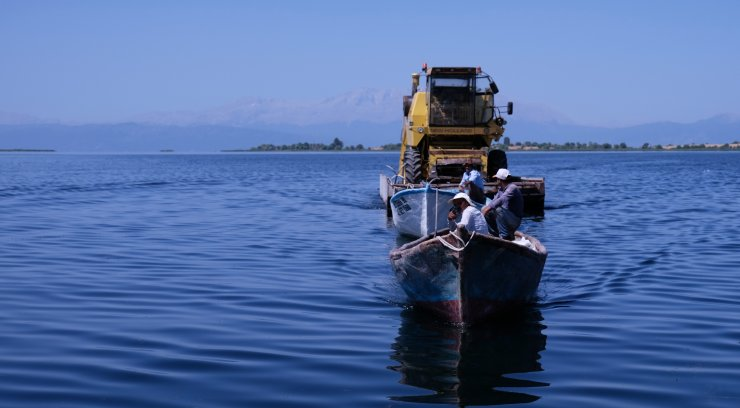 Adada hasat bitti, 'biçerdöver' göl üzerinde taşındı