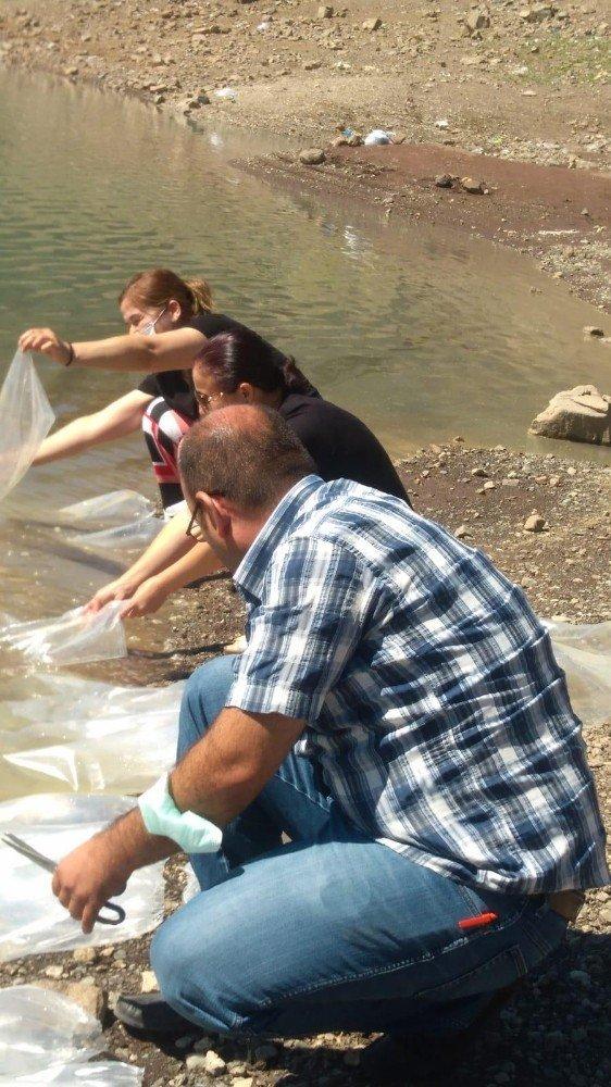 Mersin'de otobüsün bagajında 2 bin 500 adet doktor balığı ele geçirildi