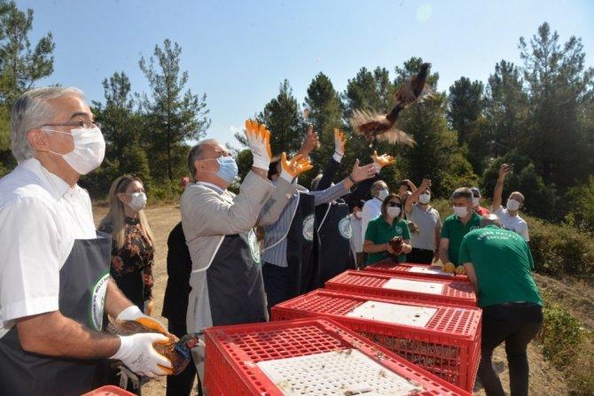 Yalova'da bin adet sülün doğayla buluştu