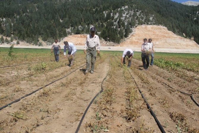 Konya'da çiftçiler, zararlarını karşılamadığını iddia ettikleri sigorta şirketini tarlada protesto etti