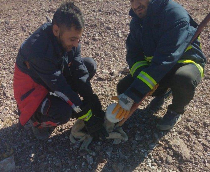 Başı plastik bidona sıkışan köpek  kurtarıldı