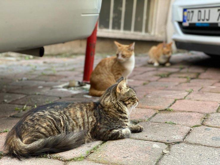 Emekli maaşıyla sokak kedilerine bakıyor