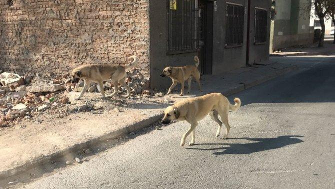 Konya'da sokak ve caddeler güvercinler ve sokak hayvanlarına kaldı