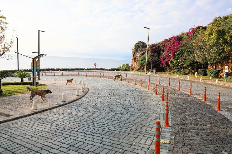 Vaka oranının iki katına çıktığı Antalya evlere kapandı, sokaklar köpeklere kaldı