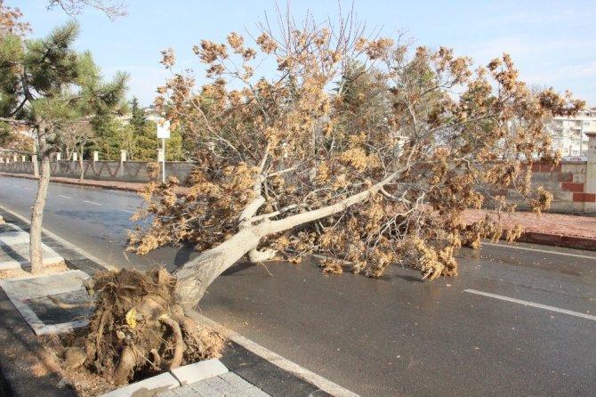 Karaman'da şiddetli rüzgar ağaçları devirdi