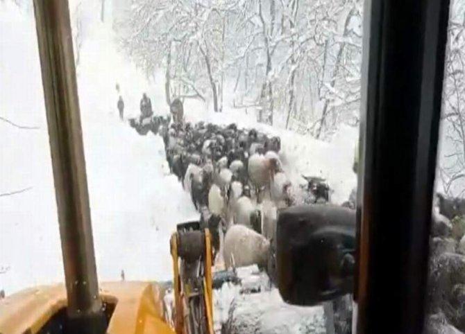 Karda mahsur kalan çoban ve koyun sürüsü kurtarıldı