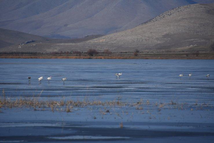 Flamingolar, kış ayında da kurumaya yüz tutan gölde