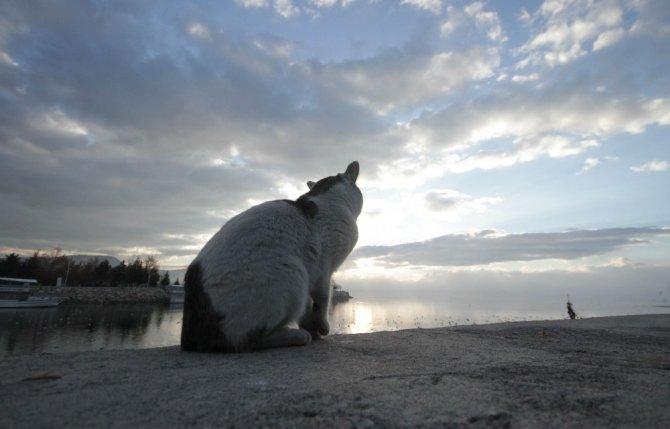 Kediler karınlarını doyurmak için balıkçıların yolunu gözlüyor