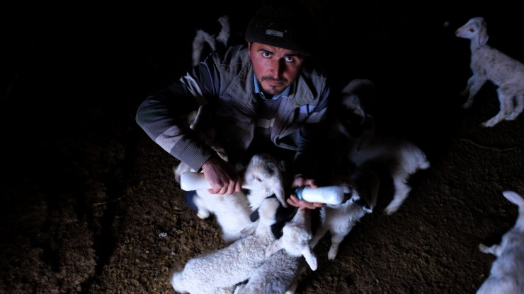 Kuzuları biberonla besliyorlardı, çalınan koyunlarından 60'ı bulundu