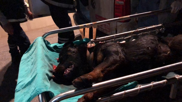 Öldüresiye dövülen köpek kanlar içinde çöplükte bulundu