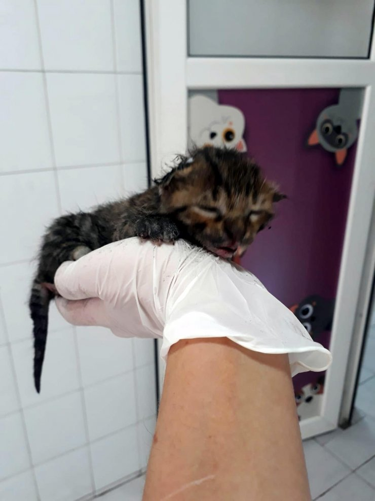 Yangından yaralı kurtarılan yavru kedi, 'Ateş' adı verilip, sahiplendirildi