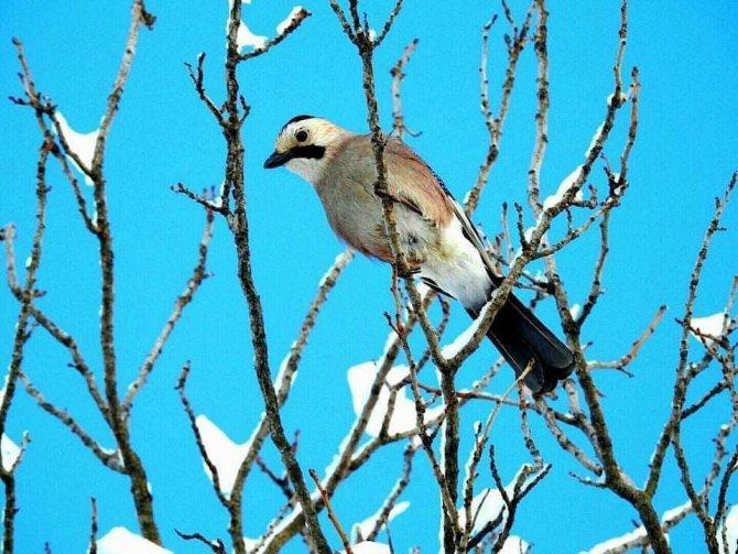 Fotoğraf severler Uludere'de kuş türlerini fotoğrafladı
