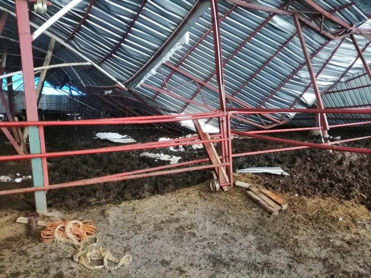 Kar nedeniyle çatı çöktü: 3 hayvan telef oldu