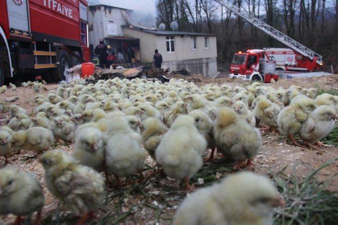 56 bin civcivin bulunduğu çiftlikteki yangında duygulandıran görüntüler