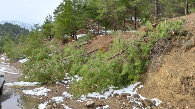 Kar çam ağaçlarını devirdi