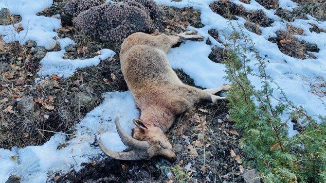 Yaban keçisi avı 38 bin liraya patladı