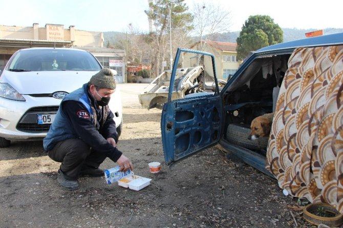 Oto tamircisi, 7 köpek yavrusu ve annesine sahip çıktı